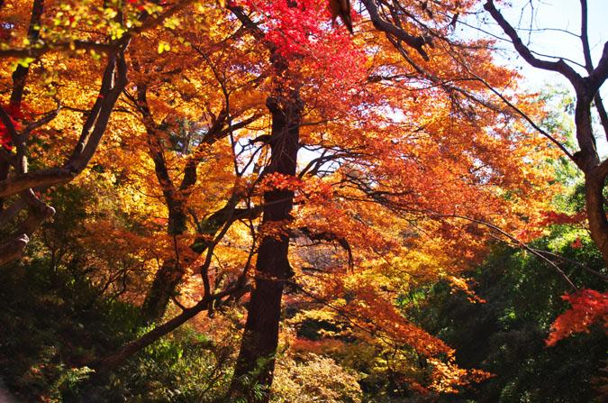 佐野市 唐沢山神社の紅葉1_a0263109_14503461.jpg