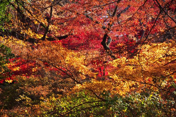 佐野市 唐沢山神社の紅葉1_a0263109_1450583.jpg