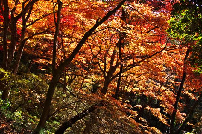 佐野市 唐沢山神社の紅葉1_a0263109_145105.jpg