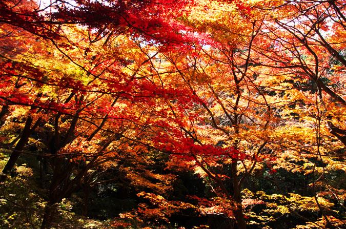 佐野市 唐沢山神社の紅葉1_a0263109_14511262.jpg