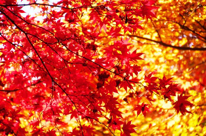 佐野市 唐沢山神社の紅葉1_a0263109_14512462.jpg