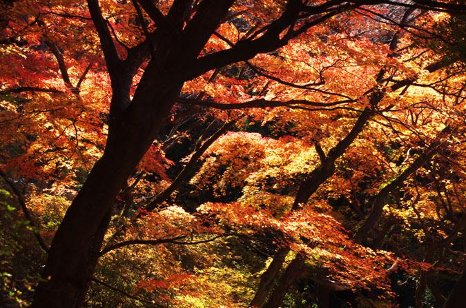 佐野市 唐沢山神社の紅葉1_a0263109_1452068.jpg