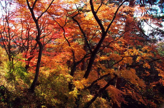 佐野市 唐沢山神社の紅葉1_a0263109_14522361.jpg