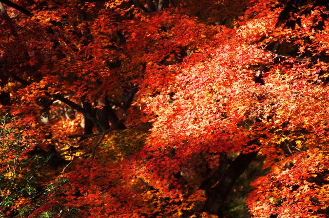 佐野市 唐沢山神社の紅葉1_a0263109_14525390.jpg