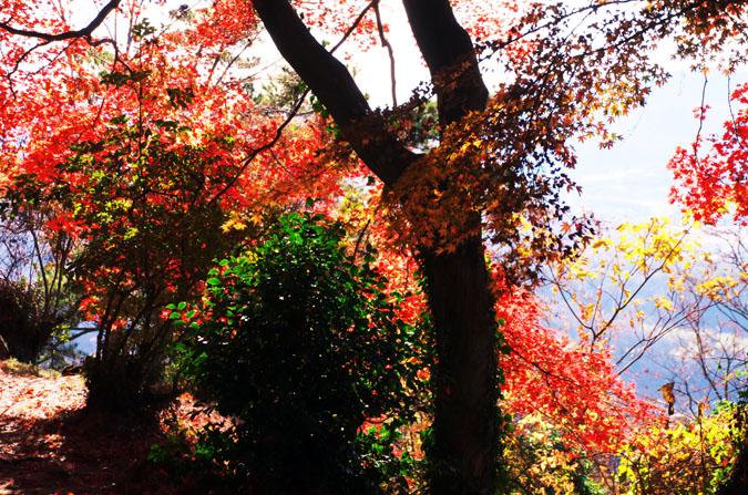 佐野市 唐沢山神社の紅葉1_a0263109_14533184.jpg