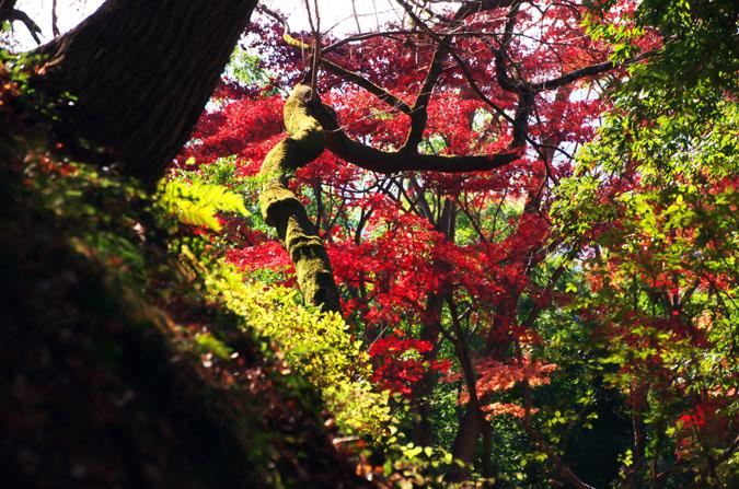 佐野市 唐沢山神社の紅葉2_a0263109_15191710.jpg