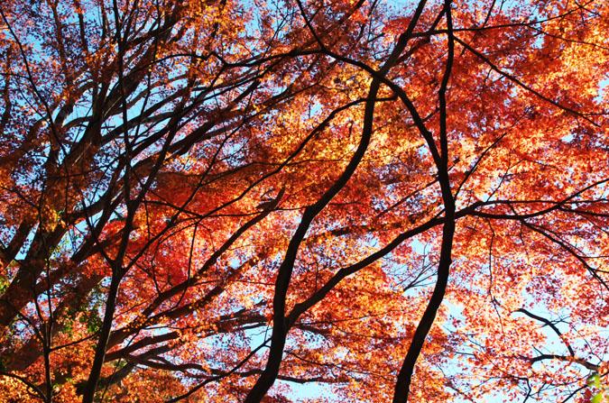佐野市 唐沢山神社の紅葉2_a0263109_15192810.jpg