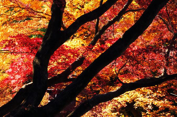 佐野市 唐沢山神社の紅葉2_a0263109_1519316.jpg