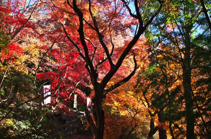 佐野市 唐沢山神社の紅葉2_a0263109_15195344.jpg