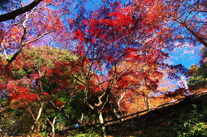 佐野市 唐沢山神社の紅葉2_a0263109_15202799.jpg