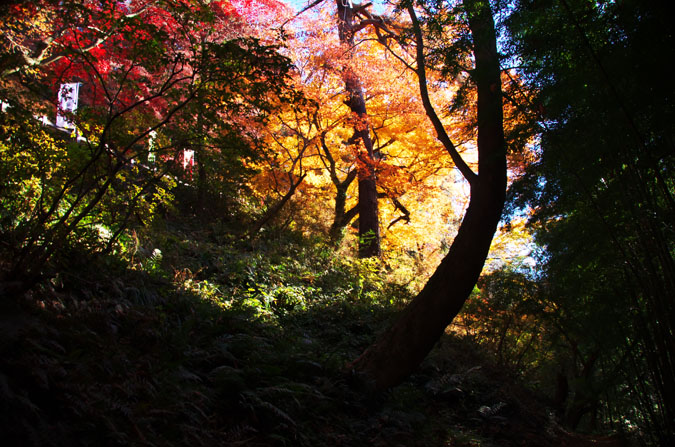 佐野市 唐沢山神社の紅葉2_a0263109_1520470.jpg