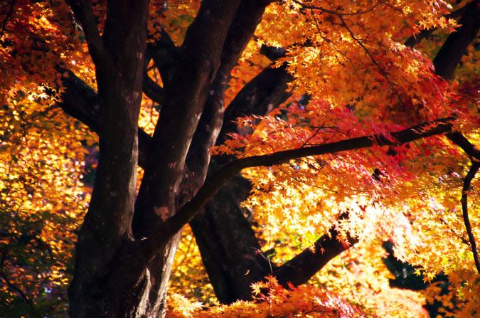 佐野市 唐沢山神社の紅葉2_a0263109_15212356.jpg