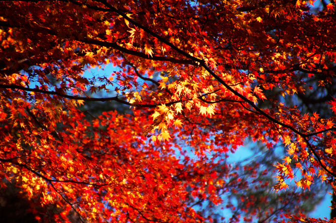 佐野市 唐沢山神社の紅葉2_a0263109_15215665.jpg