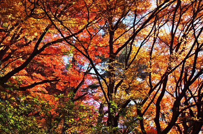 佐野市 唐沢山神社の紅葉2_a0263109_1521823.jpg