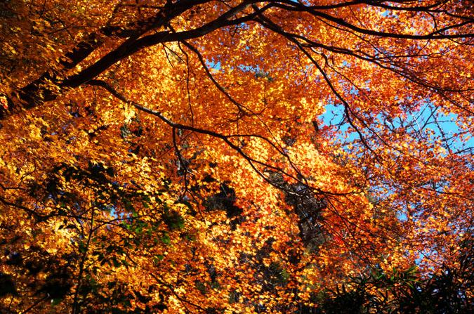 佐野市 唐沢山神社の紅葉2_a0263109_15222450.jpg