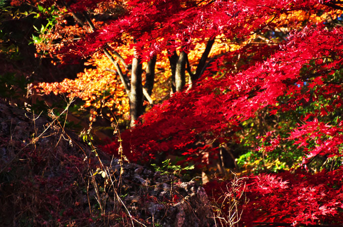 佐野市 唐沢山神社の紅葉2_a0263109_15223724.jpg