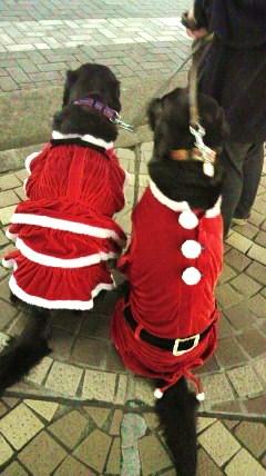 メリークリスマス_f0208112_21394025.jpg