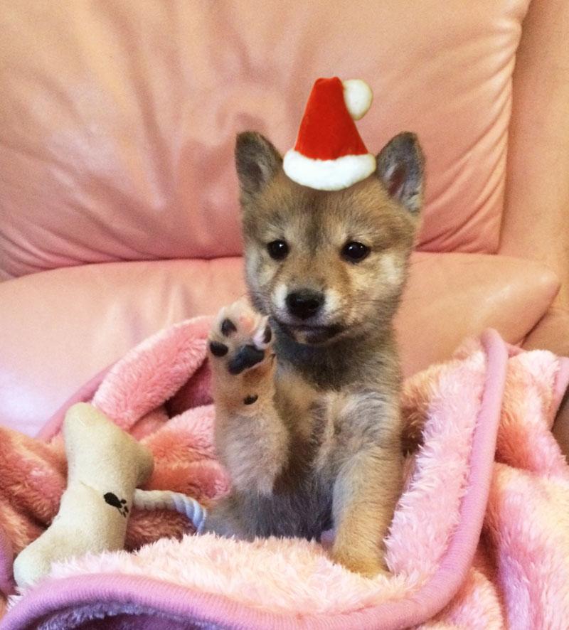 メリー☆クリスマス!_e0162117_139327.jpg