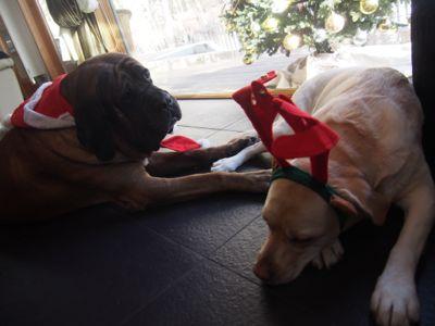 Merry Christmas〜♪_e0192217_1523727.jpg