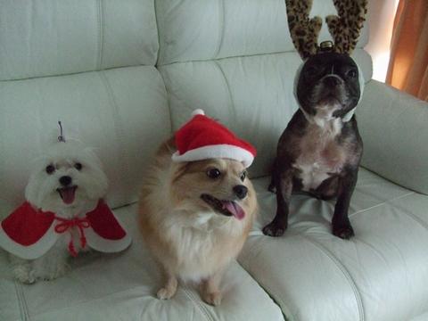 Merry Christmas♡♡_e0303431_1938191.jpg