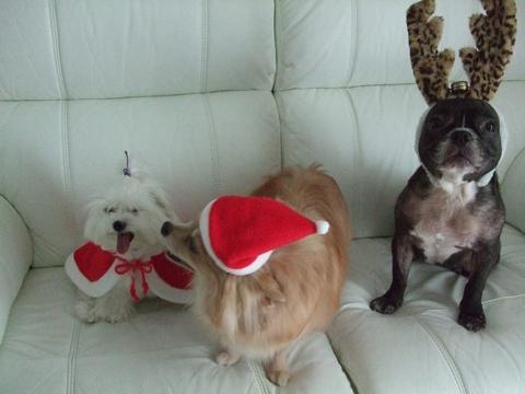 Merry Christmas♡♡_e0303431_19384589.jpg