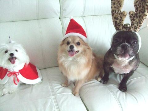Merry Christmas♡♡_e0303431_19394477.jpg
