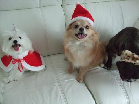 Merry Christmas♡♡_e0303431_1939814.jpg