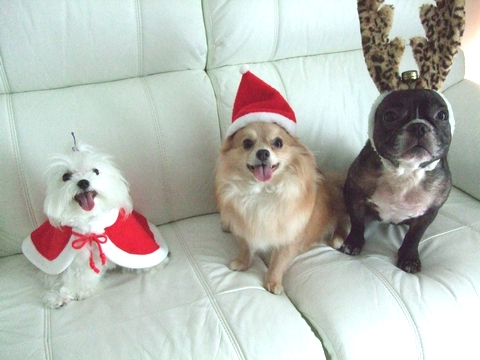 Merry Christmas♡♡_e0303431_19405762.jpg