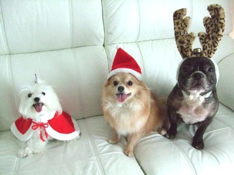 Merry Christmas♡♡_e0303431_19412137.jpg