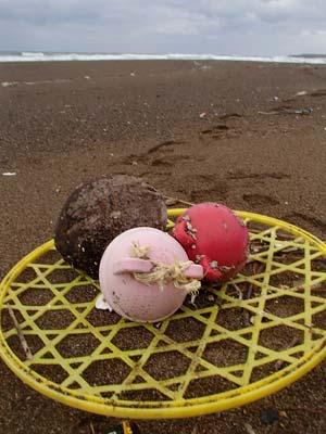 三里浜も荒れてます!_c0019338_23595081.jpg