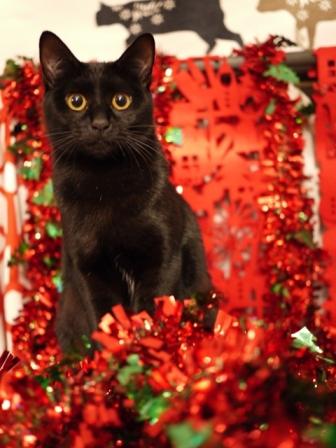 クリスマスイヴ猫 てぃぁら編。_a0143140_2115497.jpg