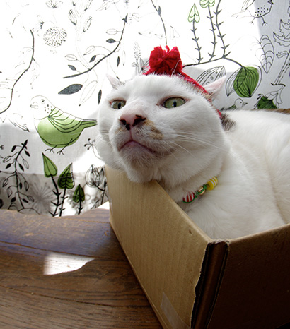 Merry Xmas! 2013_a0028451_13112872.jpg