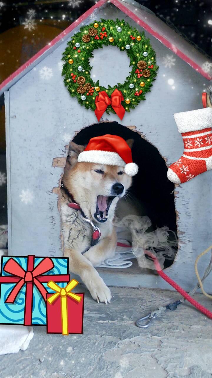 サンタさん来るといいなぁ_e0081959_1702451.jpg