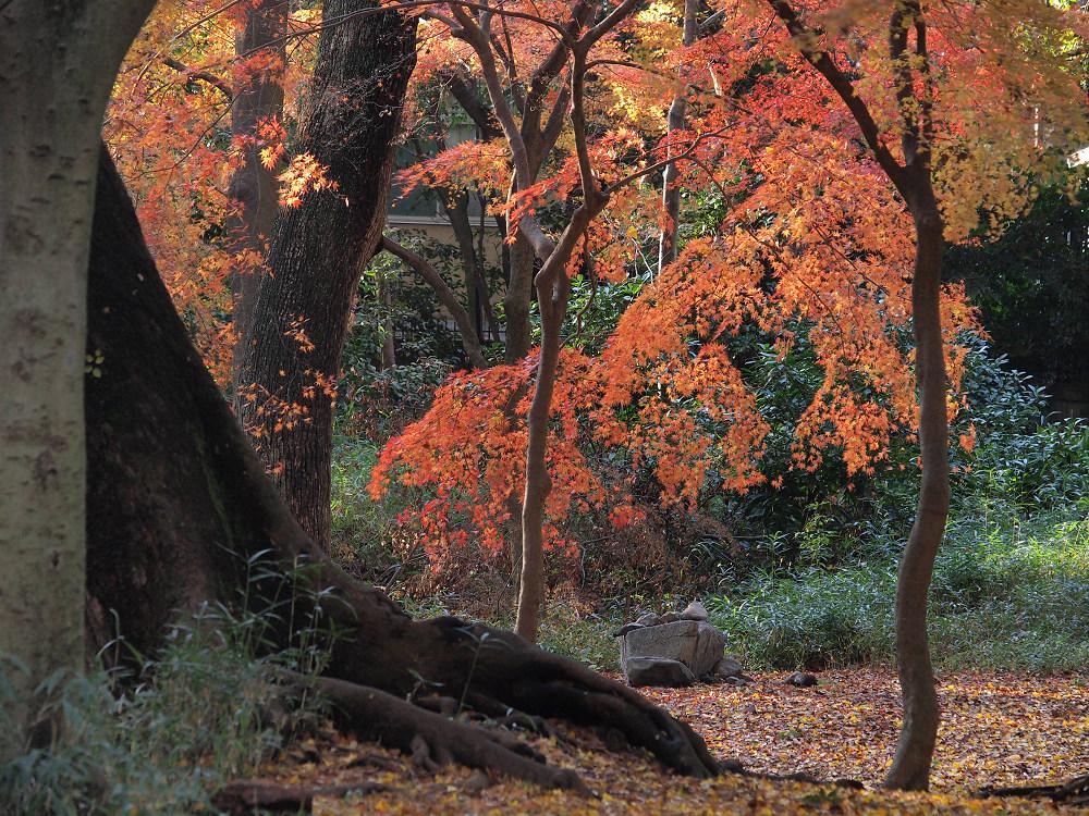 紅葉 2013 <糺の森>            _f0021869_028088.jpg