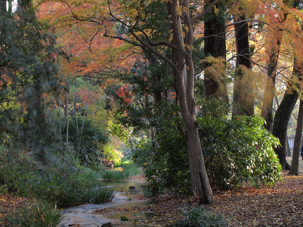 紅葉 2013 <糺の森>            _f0021869_029918.jpg