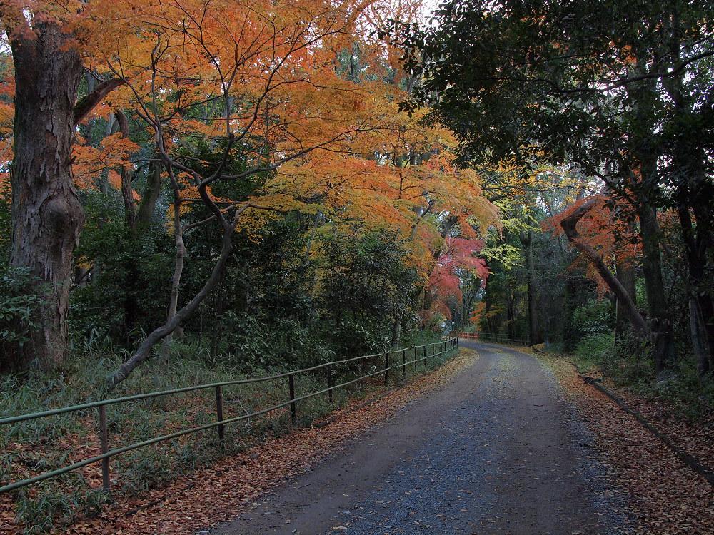 紅葉 2013 <糺の森>            _f0021869_0312981.jpg