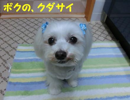 b0193480_1584344.jpg