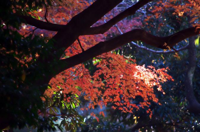 新宿御苑の紅葉3_a0263109_1049756.jpg