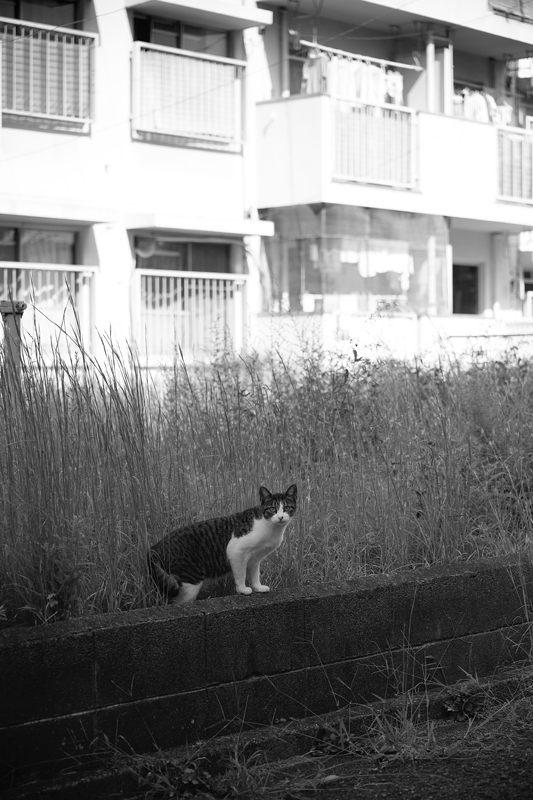 街角ニャンコ・あちこちニャンコ_f0032011_18484074.jpg