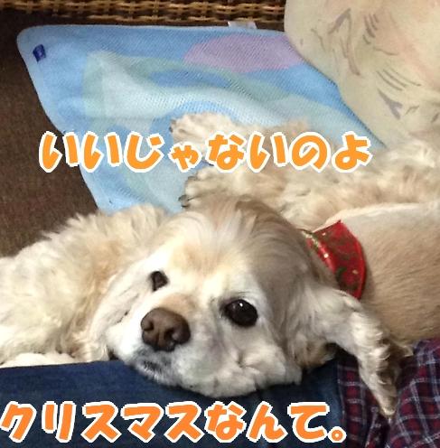 b0067012_162247.jpg