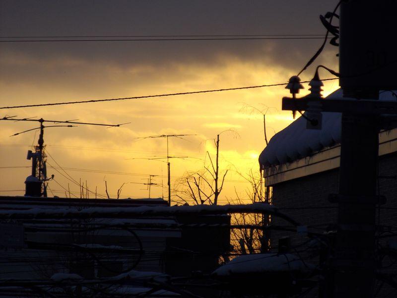 冬至から3日目 気がつけばパフィオペディルム開花_c0025115_1903021.jpg