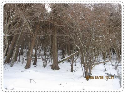 f0193521_20105335.jpg