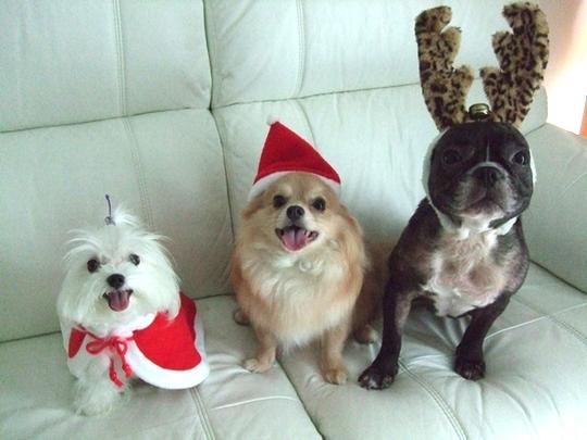 Merry Christmas♡♡_e0303431_17551724.jpg