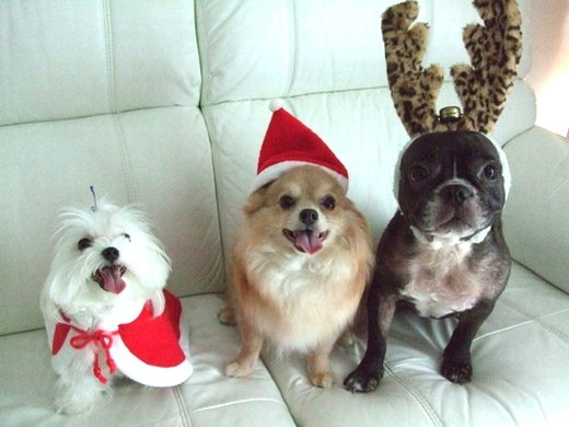 Merry Christmas♡♡_e0303431_1755336.jpg