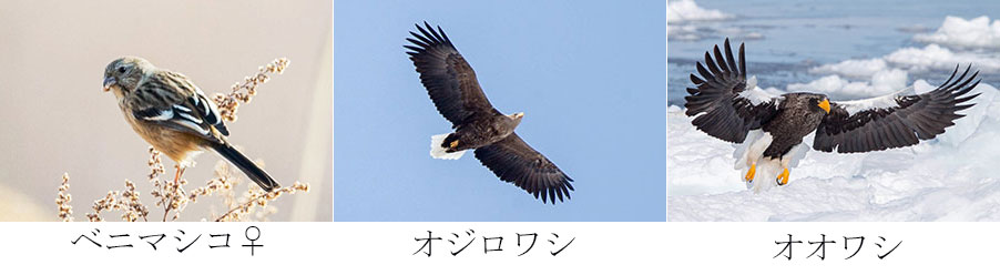 e0104632_1621192.jpg