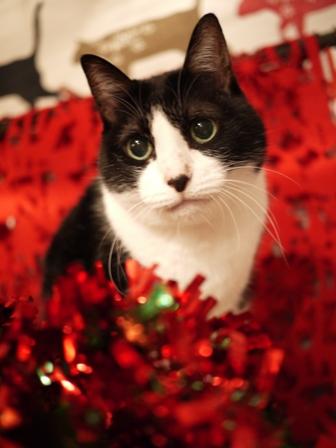 クリスマス猫 空しぇるらぃらぎゃぉすてぃぁらみるきぃ編_a0143140_23181072.jpg