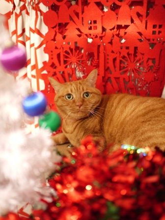 クリスマス猫 空しぇるらぃらぎゃぉすてぃぁらみるきぃ編_a0143140_2319217.jpg