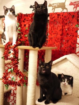 クリスマス猫 空しぇるらぃらぎゃぉすてぃぁらみるきぃ編_a0143140_23253589.jpg