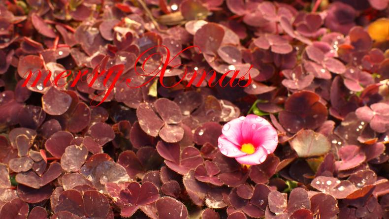 メリークリスマス_a0306355_13105114.jpg