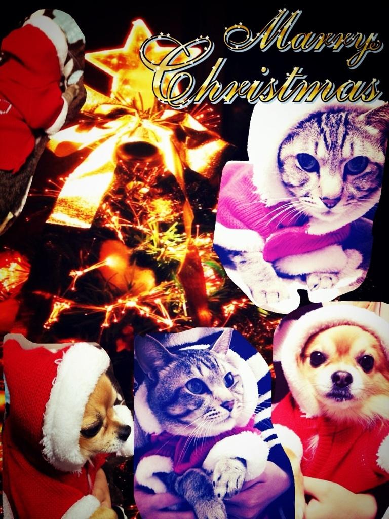 メリー・クリスマス!_b0119466_2329479.jpg